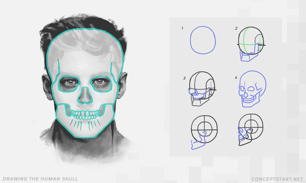 drawing-the-human-skull-for-face