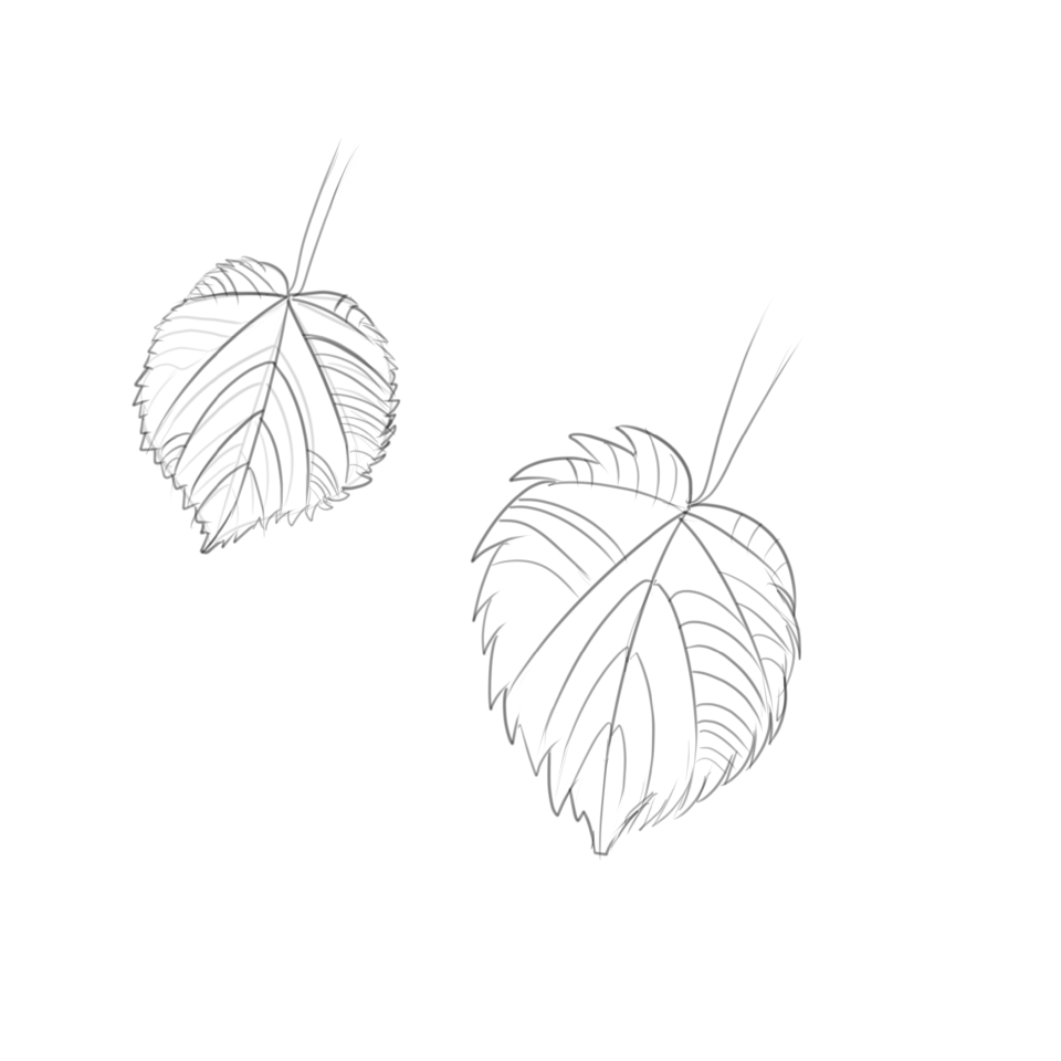 Assignment from shape seeker method: leaf.